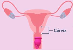 copa menstrual cervix